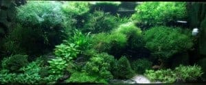 sprookjesbos 225 liter aquascape