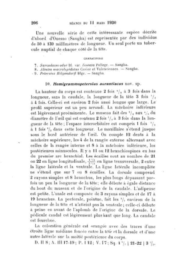 Hemigrammopetersius aurantiacus - Eerstbeschrijving deel 1
