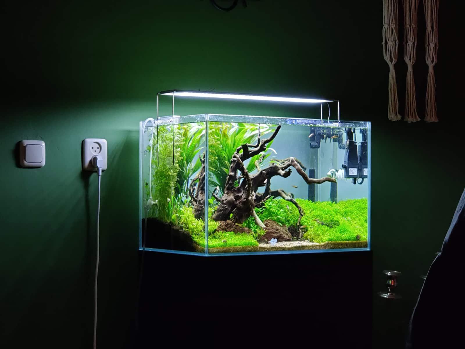 Jaap Groene Aquarium