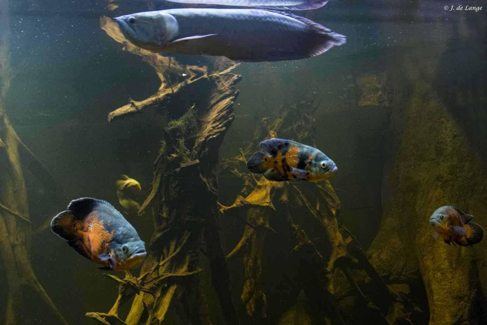 Hout in het aquarium