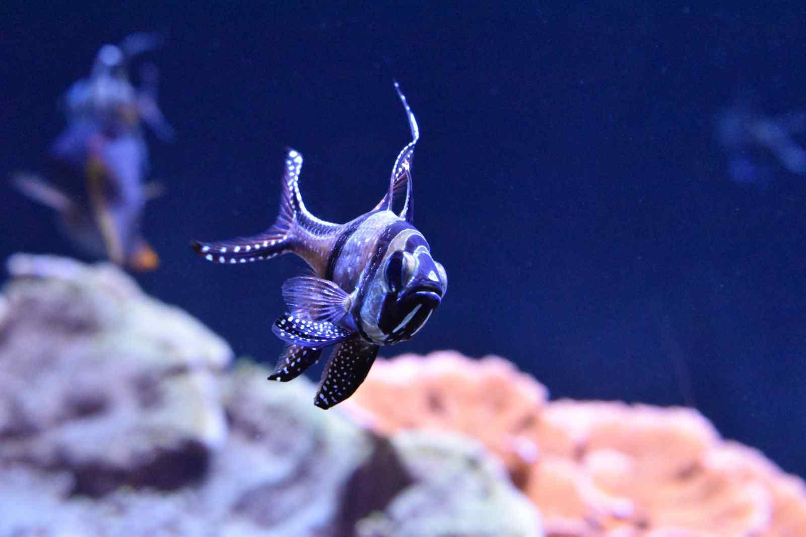 Heb je een oppas nodig voor je vissen