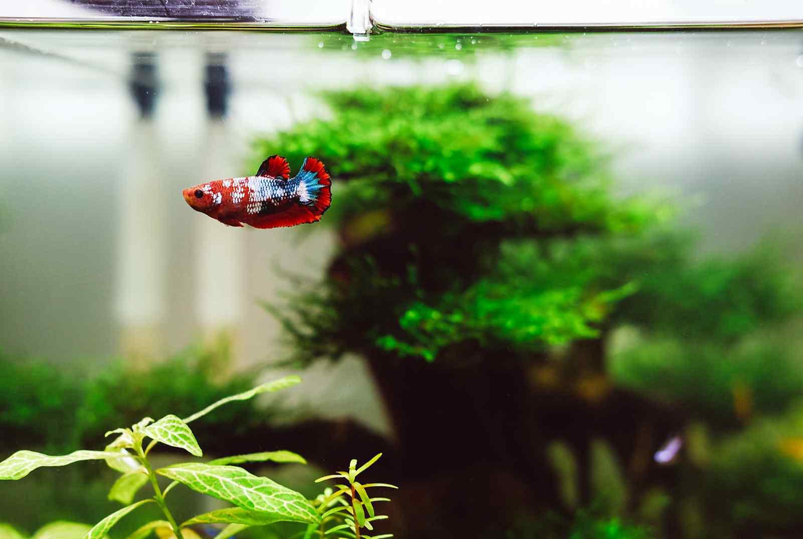 Co2 in je aquarium